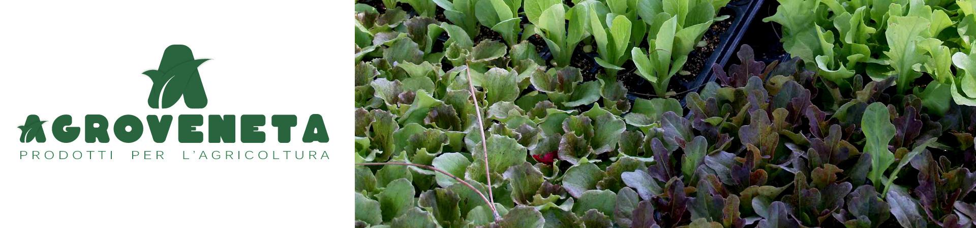 Piante da orto/barbatelle  Agroveneta